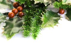 holly berry - stock photo