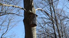 Tree bark made nesting boxes hung on a tree branch Stock Footage