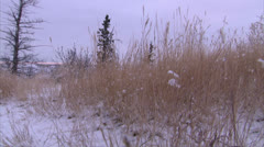 Tall Grass in Snow Covered Field HD Video - stock footage