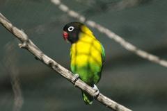 Wildlife and animals - exotic bird Stock Photos