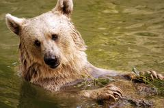 Wildlife photos - bear Stock Photos