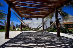 mexico hammock tree palm  peace - stock photo