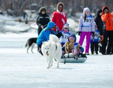 Mushing on husky dogs at baikal fishing 2012 Stock Photos