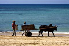 Hand cart  people dustman lagoon Stock Photos