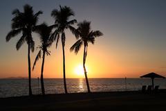 Stock Photo of Sunset Palms