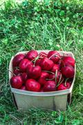 Cherry inside wooden  basket Stock Photos