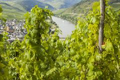 Mosel vineyard in germany Stock Photos