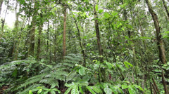 Interior of tropical rainforest in the Ecuadorian Amazon - pan. Stock Footage