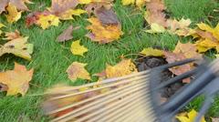 Closeup autumn tree leaves rake molehill mole hill meadow Stock Footage