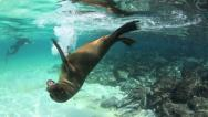Stock Video Footage of Playful sea lion Galapagos Island