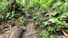 Walking up a series of steps on a rainforest path in the Ecuadorian Amazon Stock Footage