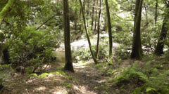 Beautiful natural forest scene Stock Footage
