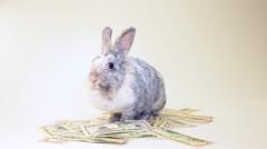 Rabbit eating dollar bills in isolation - stock footage
