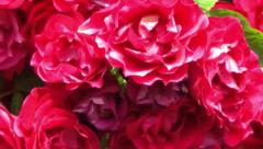 Bouquet of Red Roses Stock Footage