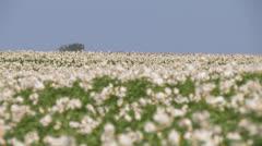 Potatofield rack focus Stock Footage