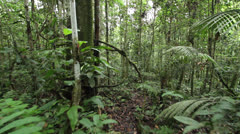 Walking through a tangle of lianas in tropical rainforest in the Ecuadorian Amaz Stock Footage