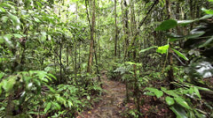Walking through tropical rainforest in the Ecuadorian Amazon after rain Stock Footage