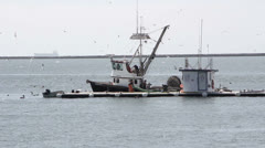 Commercial Fishing Boat and Live Bait Barge Stock Footage