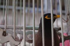 Bird in the cage Stock Photos