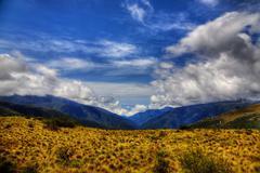 manu national park - stock photo
