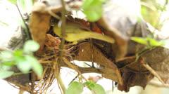 Mother bird in nest Stock Footage