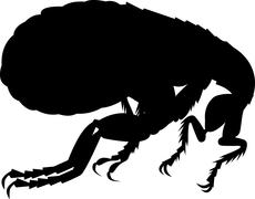 flea silhouette - stock illustration