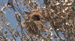 Birds fly out of the nest Stock Footage