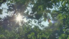 Hopeful Sunlight through Leaves - 29,97FPS NTSC Stock Footage