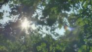 Stock Video Footage of Hopeful Sunlight through Leaves