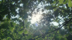 Hopeful Inspirational Sun Shining through the Leaves - 29,97FPS NTSC Stock Footage