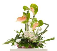 basket of anthurium essencia - stock photo