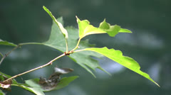 Leaf in sharp focus against a blurred background of water Stock Footage