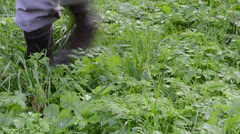 Gardener rubber boots walk morning dew wet meadow grass Stock Footage