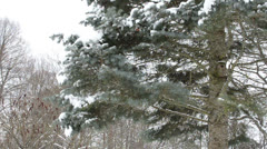 Bird house hang on christmas fir spruce tree snowy branches Stock Footage