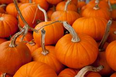 piles of pumpkins background - stock photo