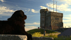 Newfoundland Dog Cabot Tower Stock Footage
