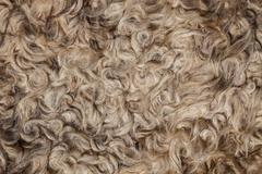 The texture of the fur sheepskin Stock Photos