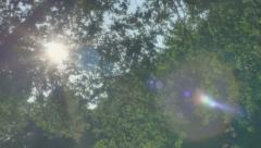 Summer Sun Lens Flare Green Leaves Park Trees - 29,97FPS NTSC - stock footage