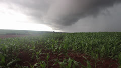 Storm Coming in Corn Field Stock Footage