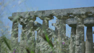 Stock Video Footage of Grasses in front of an Ancient Greek Temple