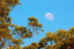 Daylight moon Stock Photos