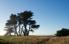 Trees near the coast in northern california Stock Photos