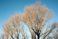 The leafless trees in winter Stock Photos