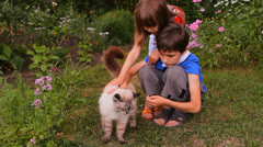Boy and girl, brother and sister, children petted the cat in nature Stock Footage