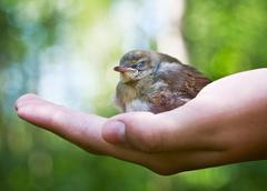 Nestling in the palm Stock Photos
