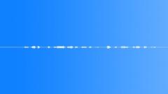 Great Kiskadee Bird - sound effect