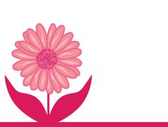 Pink aster flower Stock Illustration