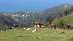 Asturian horses Stock Footage