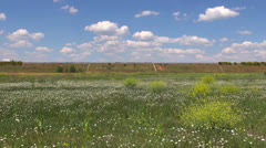 Road over flowered field Stock Footage