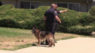 Stock Video Footage of Police Action, k-9 police dog